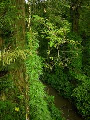 Guatemala - La Selva / Forest (Galeon Fotografia) Tags: naturaleza nature rainforest guatemala natur selva bosque skog bos wald floresta woud regenwald   forst regenwoud selvatropical kalikasan sierradeloscuchumatanes pluviselva msitu florestahmida  forestapluvial fortquatoriale forttropiale galeonfotografa