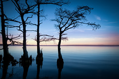Cypress Shore (Sky Noir) Tags: travel blue trees sky usa water river photography virginia us scenery unitedstatesofamerica shoreline scenic va late cypress knees silhouetted skynoir bybilldickinsonskynoircom