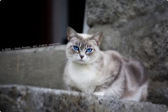 This is my home! (Luca Storer) Tags: travel blue light sunset summer sky urban italy sun white mountain color art nature beautiful animals stone cat canon wonderful garden photography gold grey freedom fly amazing luca eyes flickr foto artistic postcard efs1855mm best line fantasy publicity incredible 2009 ls str storer blueribbonwinner polestar supershot mywinners flickraward diamondclassphotographer flickrdiamond flowerpicturesnolimits macrophotosnolimits flickrestrellas rubyphotographer flickrlovers canoneos1000d eos1000d fabbow lucastorer