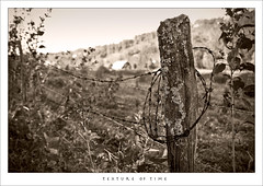 Texture of time (Angelrays) Tags: blackandwhite bw sepia barn fence blackwhite farm country monochromatic pasture barbedwire lichen barbedwirefence fencepost