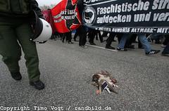Antifa-Demonstartion in Salzwedel (randbild) Tags: bird dead deutschland duck accident protest police demonstration drake ente tot polizei vogel unfall überfahren erpel salzwedel sachsenanhalt overrun antifaschismus antifacism plattgefahren antifashism rechtextremismus