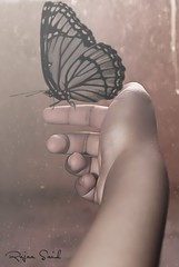 - Butterfly (Rajaa Said   ) Tags:  butterfly