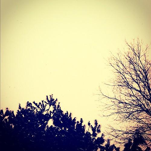 #treeseries