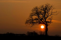 Gentle embrace (Gies!) Tags: sunset tree boom embrace twente delden ondergang omarming flickraward flickraward5 mygearandme mygearandmepremium