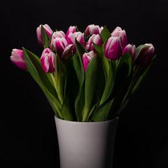 (mariberlin) Tags: magenta lowkey 2012 tulpen