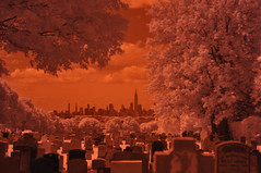 _DSC1568 (hayro) Tags: nyc newyorkcity trees red graveyard ir infared irphotography hoyar72filter irinfared