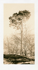 Corstorphine Hill, Edinburgh (Ivan B Palli) Tags: tree golf edinburgh kodak lith se5 corstorphinehill adox moersch bromesko