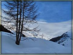 White Moon (mbald60) Tags: sky moon white alberi blu cielo azzurro valleaurina whitemoon mbald60