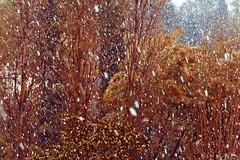 (_sari.s_) Tags: roma italia neve snowfall febbraio 3febbario2012