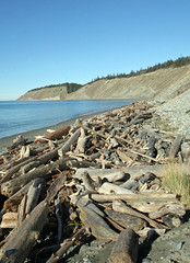 Looking north towards Fort Ebey (Librarianguish) Tags: walk gorgeous bluff sunnyday 212 ebeyslanding unseasonablywarm