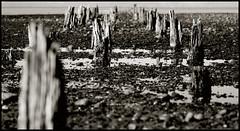 Avis de tempête. (Eric Kadijevic) Tags: ocean new leica wood sea mer pic zealand nouvelle bois calme destroy tempête strorm marée detruit zélande pontont