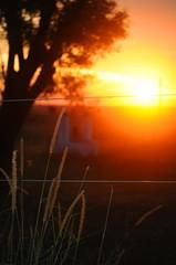 (Cicloquimico) Tags: sunset paran argentina atardecer nikon entrerios d5000