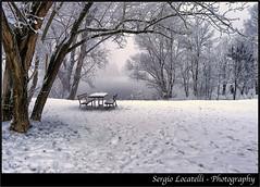 Pavia - Lungo Ticino (agoralex) Tags: leica parco tree ice gelo alberi neve freddo ghiaccio pavia flickraward dlux5 mygearandme agoralex