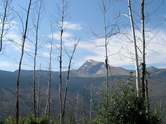 GLACIER NATIONAL PARK...A MUST SEE FOR EVERYONE! (vermillion$baby) Tags: a glaciernationalpark mountain peak tree usa park nationalpark montana trees