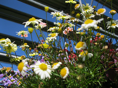 Flowers_4630866482_l