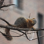 Best Squirrel House at the University of Michigan (April 4, 2014) thumbnail