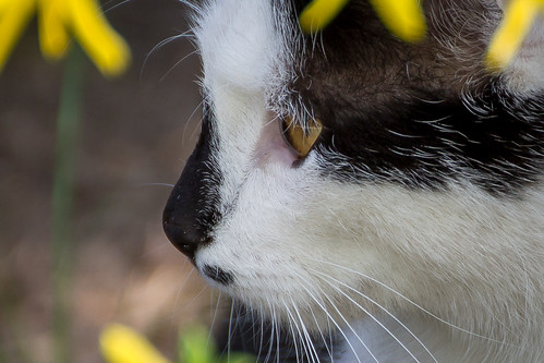 cat 3-2