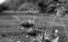 Restricted Area (leicaflex sl) (PositiveAboutNegatives) Tags: leica bw slr film analog vintage weeds sl summicron 90mm coolscan leicaflex foma fomapan100 leitz blackandwhitefilm 11219 leicar leicaflexsl 90mmsummicron nikon9000scanner blackandwhitefilmphotography leicafilmphotography freefilmimages freefilmpictures