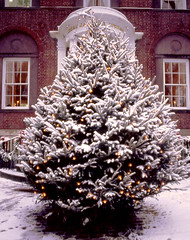 Stroll Talking Tree - Nantucket (Massachusetts Office of Travel & Tourism) Tags: christmas winter holiday snow tree capecod massachusetts nantucket