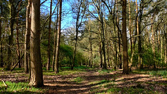 Chambers Farm Wood (lincoln_eye) Tags: uk greatbritain trees england grass leaves forest countryside spring woods woodlands europe unitedkingdom path eu sunny bluesky lincolnshire bark gb april greenery trunks 2014 wragby chamberswood