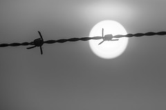The sun behind barbed wire (uw67) Tags: bw sun barbedwire nikond5300