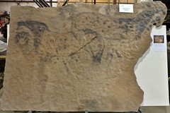 Replica of Cave Painting (Will S.) Tags: ontario canada skeletons mypics fossils trenton specimens rci reconstructions quintewest researchcastinginternational
