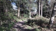 20160331_091319 (ks_bluechip) Tags: creek evans trails preserve sammamish usa2106