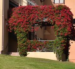 UCI_Student Housing_Middle Earth (wgnagel_uci) Tags: california building college campus university orangecounty irvine uci irvine universityofcalifornia middleearth studenthousing