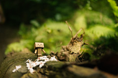 Danbo with Tung flowers (Andy-Hsieh) Tags: travel flowers glass zeiss 50mm bokeh sony carl za  a7 ssm planar tung danbo a7ii  a72  a7m2  ilce7m2