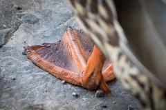 Texturas (pepsamu) Tags: life naturaleza texture textura nature animal rock canon duck vida pato roca 1100d canonistas baticao50