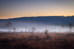 In the heart of the mire *Explored* (PixPep) Tags: trees moon mist atmosphere mire arvika koppom