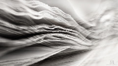paper waves (marianna armata) Tags: abstract macro monochrome lines paper newspaper movement waves pages curves overlay sheets layers conceptual monday hmm anythinggoes marianna armata sdof macromondays p2390173