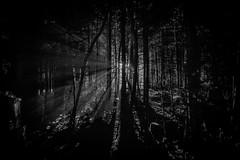 Spooky (Zapeet) Tags: camping smoke jour spooky backlit 24mm nikkor metis gaspesie contre ais fume mitis