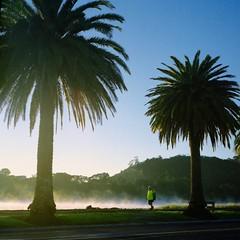Fresh walk (Steve Wheadon) Tags: morning autumn newzealand mist colour film sunrise mediumformat walk palmtrees fujifilm coromandel hivis whitianga mamiyac33 fujipro400h