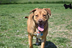 2016-05-07 10.31.14 (A Place for Paws) Tags: chance playday