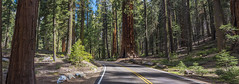 Sequoia National Park (Daniel000000) Tags: road park trees spring nikon national redwoods sequoia 2016