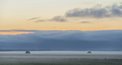 Midnight Misty Fields (Jyrki Liikanen) Tags: midnight mist misty fields midsummer nightlight sunset landscape rurallandscape countryside haystacks barns barn cloudysky fog foggyfields foggy nikonphotography
