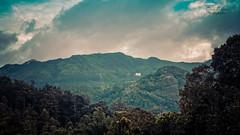 _DSC4802 (rosarioc62) Tags: munnar hill station india landscapes stream hills waterfalls bridge