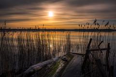 State of Stillness (Jens Haggren) Tags: olympus em1 sunrise sun sea seascape sky clouds water reflections jetty pier reeds grass morning landscape nacka sweden