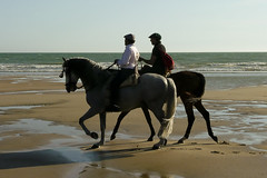 Solo.....conversando.....en ...el....Sur..... (pp diaz) Tags: españa color luz caballos mar andalucía playa paisaje cielo cádiz amistad rota costaballena