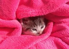 Baby (Majo Ti) Tags: cat katze baby babycat babykatze animals tiere iphone
