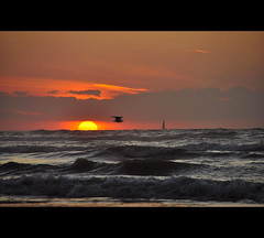 Boiling Metal ....... (*Lie ... on & off ... too busy !) Tags: sunset mer seaside zonsondergang meer sonnenuntergang seagull belgi zee westvlaanderen mwe meeuw mouette coucherdesoleil oostduinkerke vlaamsewestkust kokendmetaal mtalbouillant boilingmetal kochendesmetall