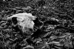 craneo (mrtrash) Tags: skull calavera craneo