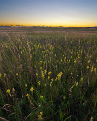 Prairie In The City (Goldensoles) Tags: sunset west calgary landscape yyc nosehillpark tokina1224mmf4 xti canoneosrebelxti