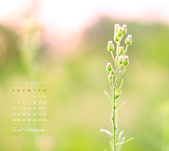 March Calendar (Faisal | Photography) Tags: flower green colors canon eos march dof calendar natural bokeh 14 usm 50 ef canonef50mmf14usm 50d canoneos50d maycalendar faisal|photography