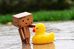 64/366 Danbo-&-Duckie (Kris Oneal Photography) Tags: reflection rain puddle toys outdoors duck amazon rubberducky 365 rubberduckie danbo 366 365project nikond90 boxtoy revotech japenesecartoons krisonealhphotography