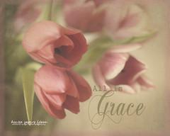 All is Grace (Denise @ New Mercies I See) Tags: pink flowers ohio stilllife green home nature petals spring tulips cinnamon text grace gifts summitcounty mogadore nikond90 justawhisper onethousandgifts kiimklassen beyondlayers