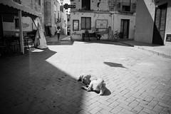 l'angolo della siesta (v.ir.g.il.e) Tags: leica bw italy dog cane italia nb sicily sicilia m9 marettimo isoleegadi egadiislands summicron28asph