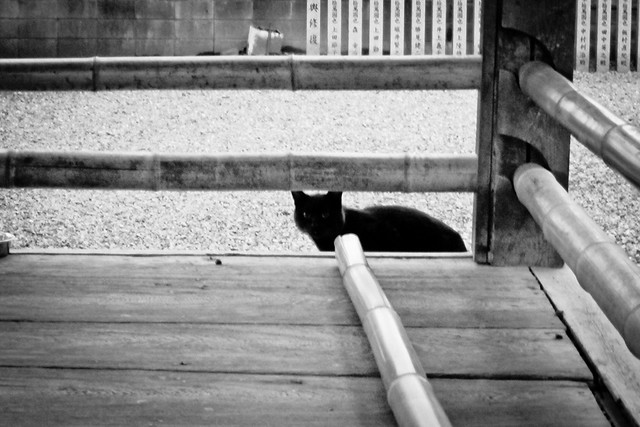 Today's Cat@2012-02-13