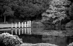 Pond reflections (Deb Jones1) Tags: park travel trees bw lake green nature water monochrome beauty canon reflections garden botanical pond flora australia places vista flickrduel debjones1